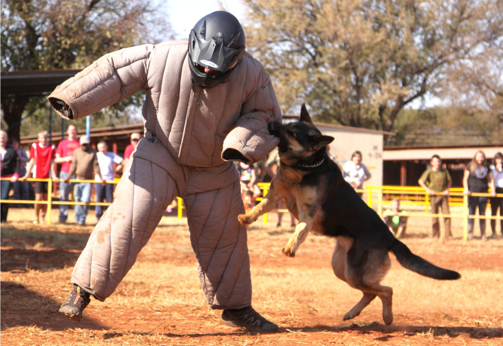 K9 Executive Protection Training